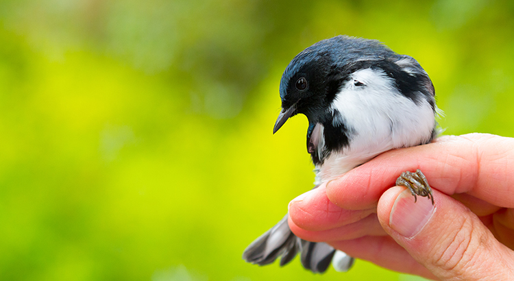 birds in a hand
